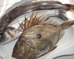 Hake , Sea bass and John Dory